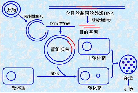 深圳沟通翻译专业基因工程翻译图片